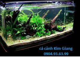 Cá cảnh Kim Giang cung cấp các loại bể cá cảnh các loại uy tín chất lượng