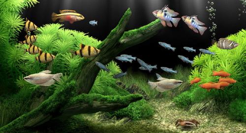 Cách nuôi cá không bị chết - cá sống chung với nhau trong bể thủy sinh