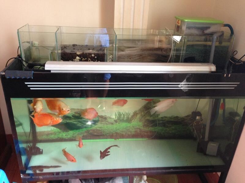 Lọc tràn trên thường được dùng cho bể cá rồng hoặc la hán