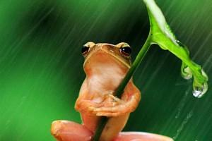 Ngắm loài ếch siêu đáng yêu