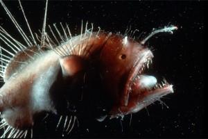 Những giống cá gớm ghiếc nhất thế giới