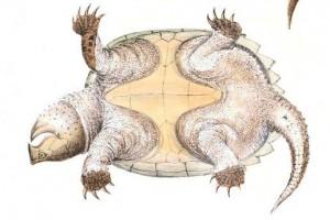 Bộ dạng kỳ cục của loài rùa có mặt từ thời tiền sử