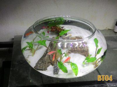 Bình cá tròn thủy tinh