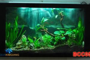 Bể cá cảnh – Bể cá thủy sinh BCC05