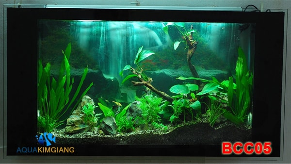 Bể cá thủy sinh BCC05