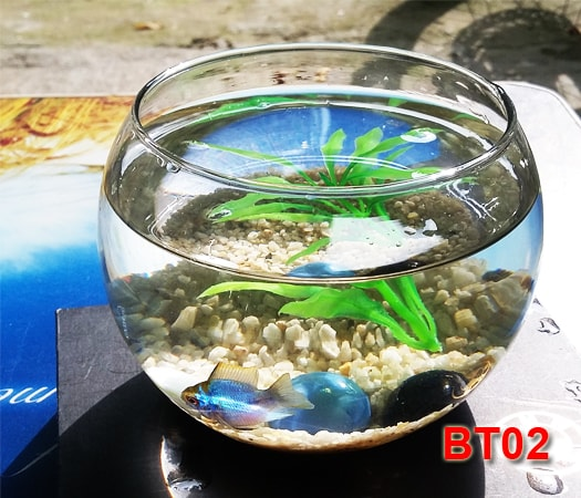 Bể cá mini BT01