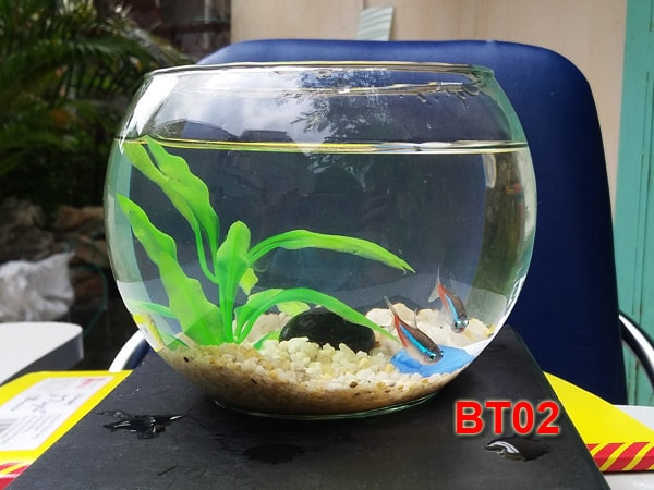 Bể cá mini BT02 với cá neon