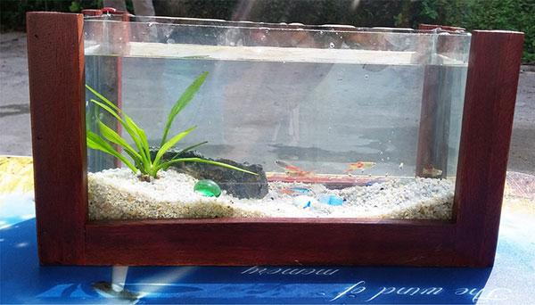 Bể cá mini CN01