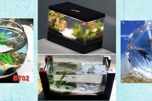 Bể cá cảnh mini – Bể cá để bàn