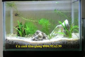 Bể cá mini CN02