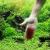 Cách làm sạch rêu và nấm mốc trong bể cá cảnh hiệu quả