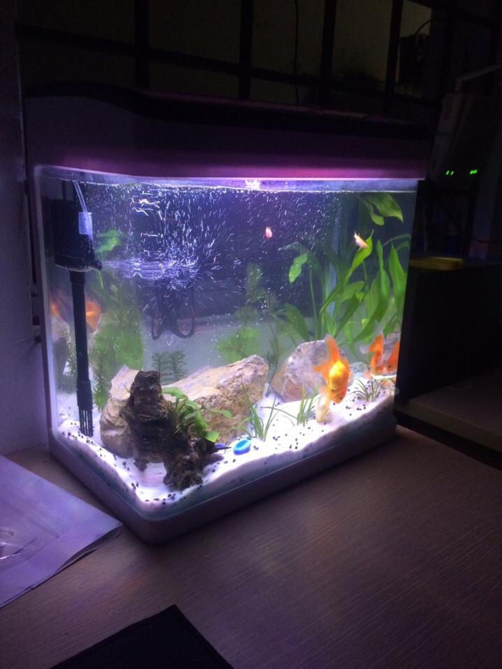 Bể cá cảnh để bàn - Bể đúc D02 khi bật đèn ánh sáng tím