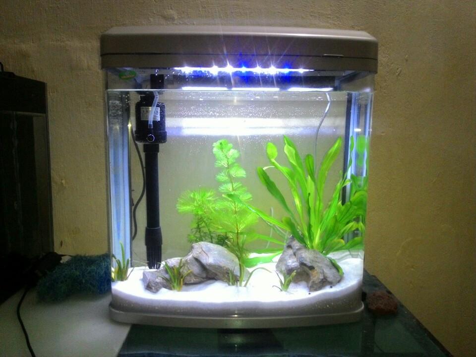 Bể cá mini - bể đúc D01