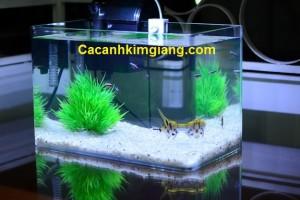 Bể Đúc D04 – Bể cá cảnh mini để bàn