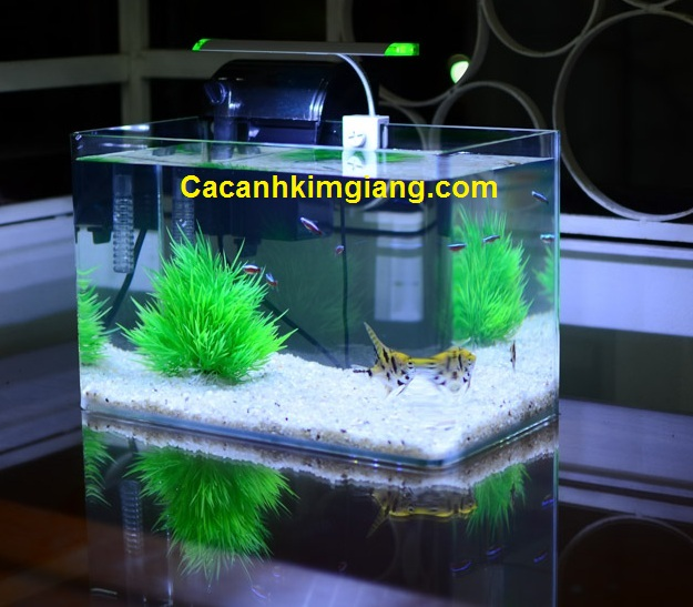 Bể cá cảnh mini D04