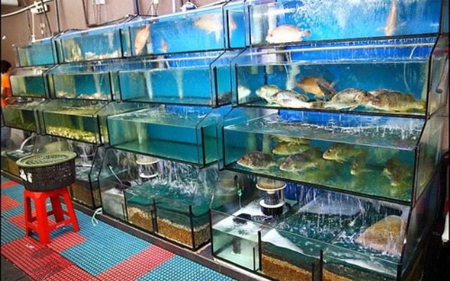 Hệ thống lọc và vật liệu lọc bể hải sản hiệu quả nhất hiện nay