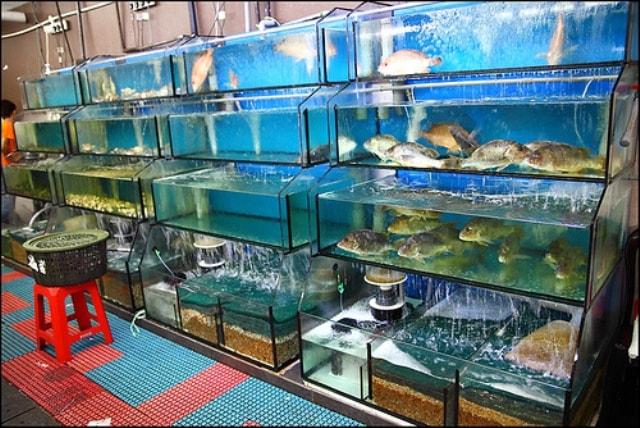 Bể hải sản được trang bị hệ thống lọc chuyên nghiệp nâng cao chất lượng hải sản