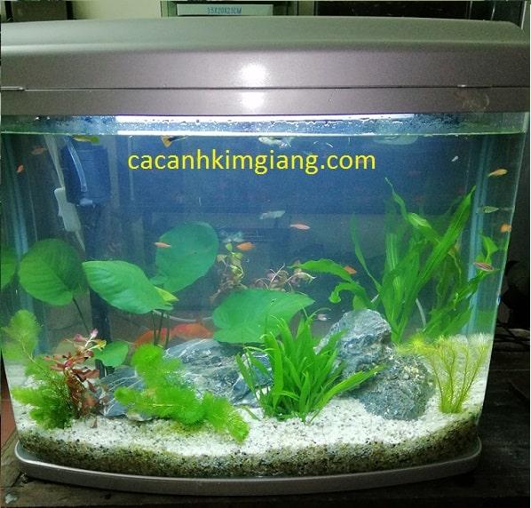 Bể cá cảnh mini D01 kích thước 58cm x 27cm x 53cm