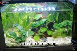 Bể đúc D04 50cm – Bể cá cảnh mini để bàn cực đẹp