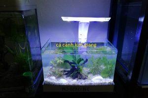 Bể đúc D04 – bể cá mini để bàn 31cm cực đẹp