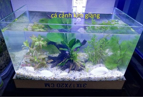 Bể cá đúc mini D04