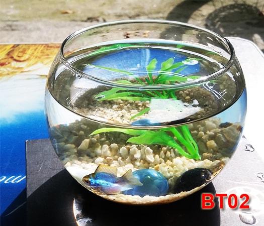 Bể cá mini - Bể tròn để bàn BT02