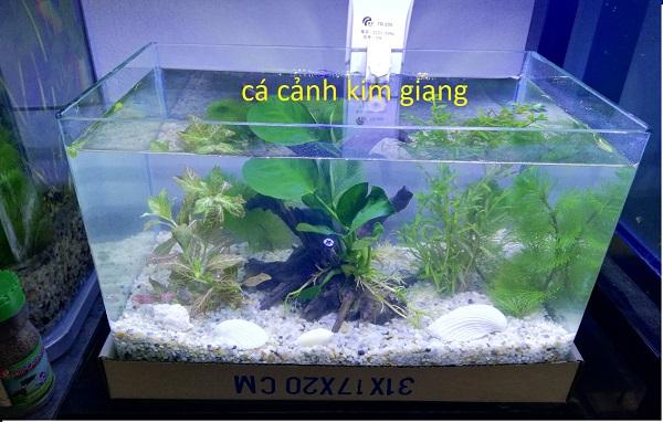 Bể cá D04 31 cm