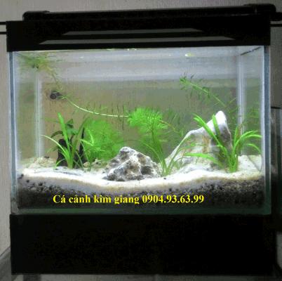 Hình ảnh bể cá mini CN02