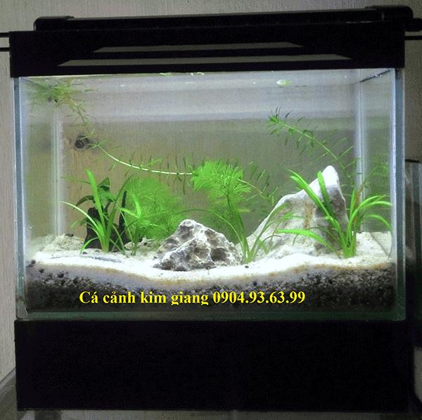 Bể cá cảnh mini CN02 dài 27cm