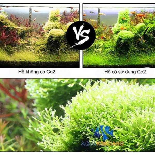 Cây thủy sinh không có CO2 và được cung cấp CO2