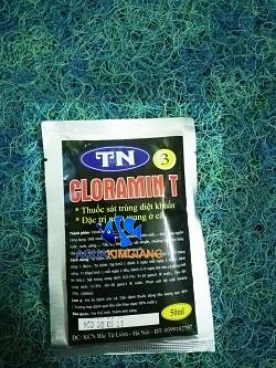 Thuốc Cloramin T trị nấm mang ở cá