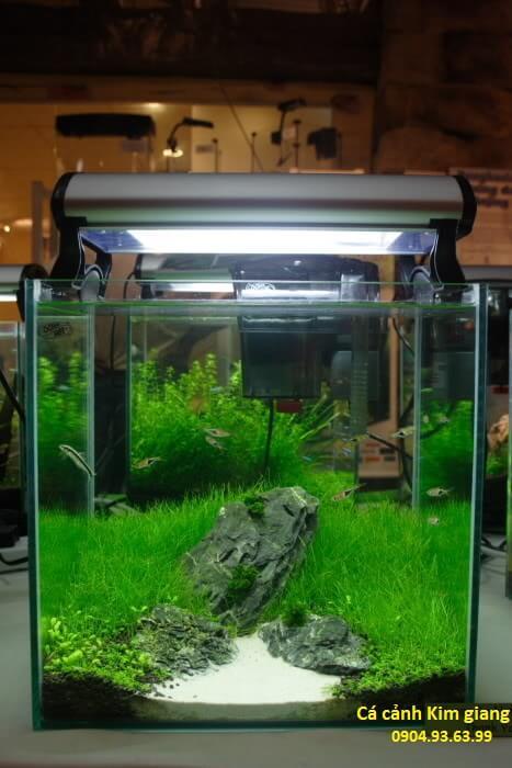 các loại bể cá mini đẹp và các loại bể cá cảnh nhỏ đáng yêu - bể thủy sinh mini