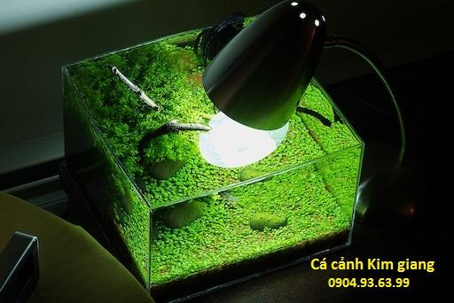 các loại bể cá mini đẹp và các loại bể cá cảnh nhỏ đáng yêu