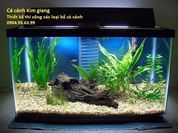 Cá cảnh Kim Giang cung cấp thiết kế các loại bể cá cảnh các loại uy tín chất lượng