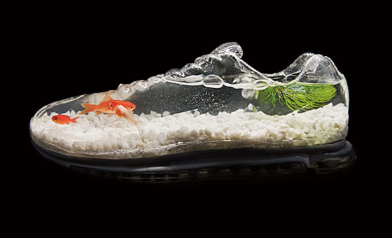 giày kết hợp để thả cá cảnh