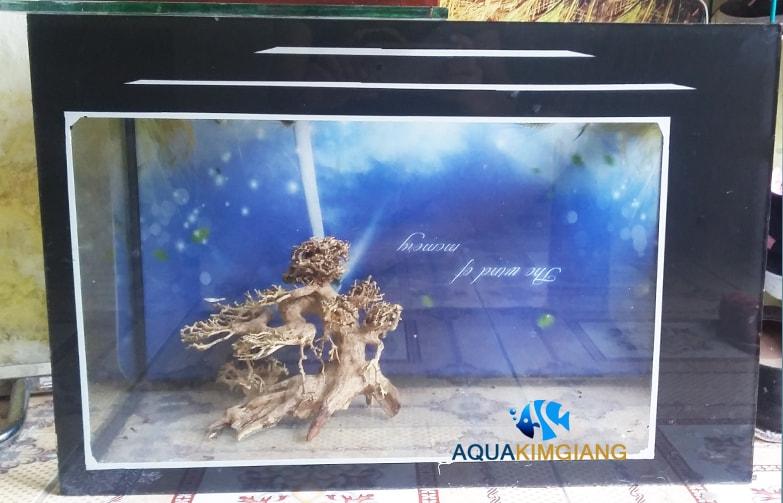 Bể cá cảnh BCC02