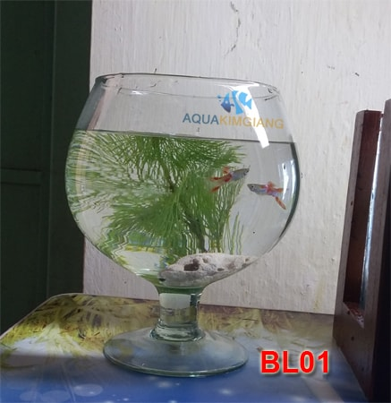 Bể ly BL01