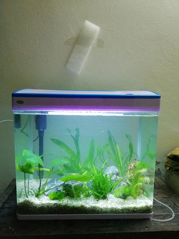 Bể cá cảnh mini D01 kích thước 38cm x 26cm x 41cm