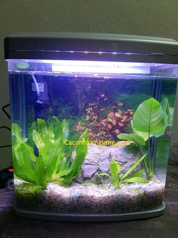 Bể cá cảnh mini D01 kích thước 38cm