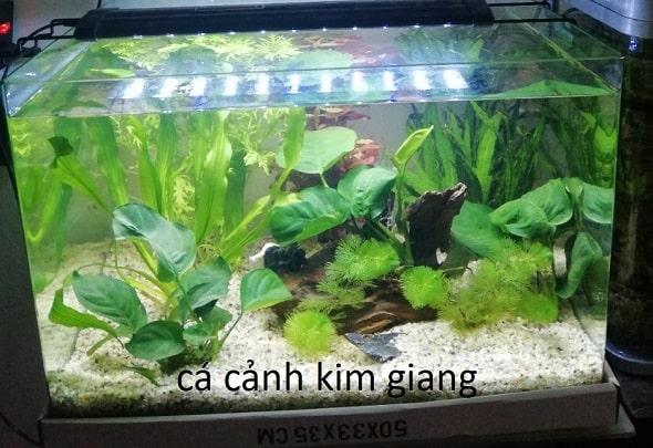 Bể cá cảnh đúc 50cm