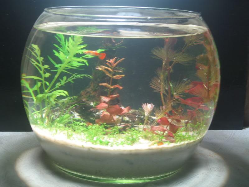 Bể cá tròn để bàn mini