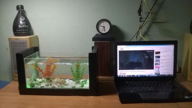 bể cá cảnh mini để bàn làm việc tại hà nội