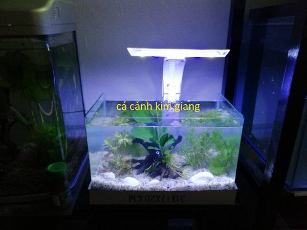Bể cá cảnh mini giá rẻ tại Hà Nội