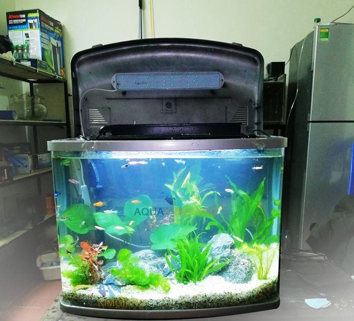 Bể cá cảnh đúc 58cm D01
