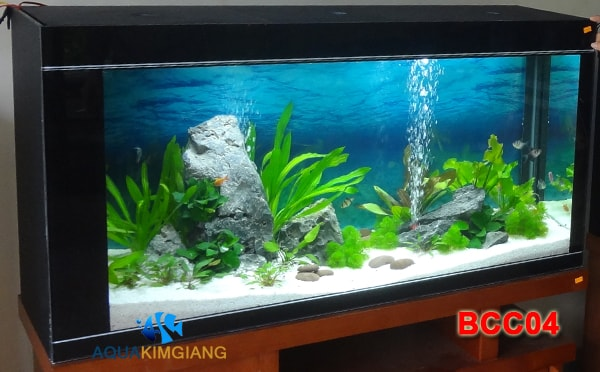 Bể cá cảnh - Bể cá thủy sinh BCC04
